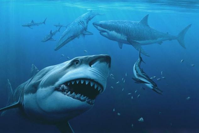 Гигантская акула мегалодон сеяла ужас в мировом океане (6 фото) — нло мир интернет — журнал об нло